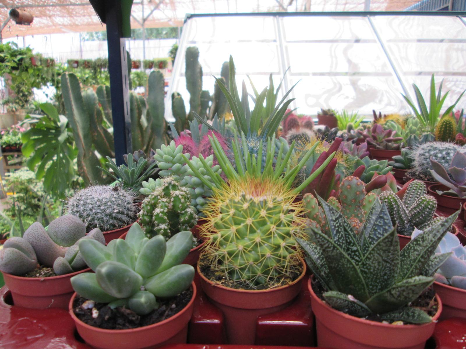 Cactus eden garden for Cactus cuidados exterior