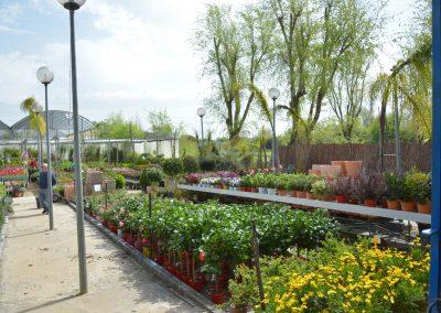 Vivero-Centro-de-Jardineria-Sevilla-Dos-Hermanas-Instalaciones-039