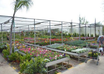 Vivero-Centro-de-Jardineria-Sevilla-Dos-Hermanas-Instalaciones-040