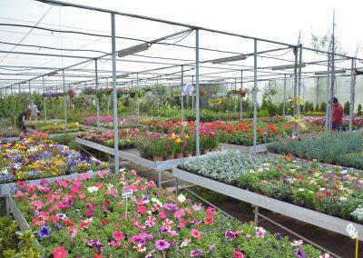 Vivero-Centro-de-Jardineria-Sevilla-Dos-Hermanas-Instalaciones-041
