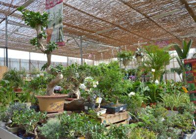 Vivero-Centro-de-Jardineria-Sevilla-Dos-Hermanas-Instalaciones-044